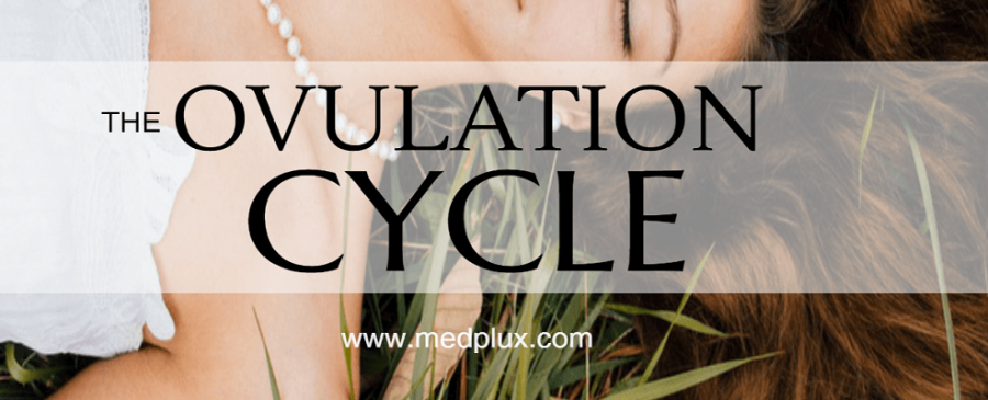 Ovulation Cycle, Test, Signs And Symptoms