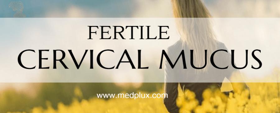 cervical fertile mucus
